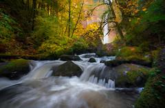 Elowah falls wide (Vasilic Bogdan) Tags: autumn mountains cold reflection fall nature rain oregon waterfalls leafs creeks