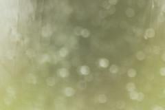 Blurry Texture (gripspix (OFF)) Tags: texture glass germany deutschland blurry distorted pane unscharf glas dettingen archiv irregular lookingthrough badenwrttemberg scheibe horb textur verzerrt durchsicht priorberg unregelmssig 20160404