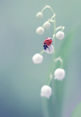 Lily of the valley (ElenAndreeva) Tags: flowers blue light summer sun flower color macro cute green nature colors forest canon bug garden insect spring amazing focus colorful soft lily dream valley ladybug buds convallaria