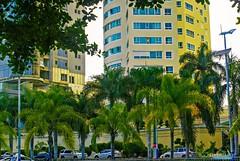 Palmeras en Santo Domingo, Av. Anacaona (Carlos Durn Photography/CAD) Tags: city verde green edificios ciudad palmeras urbano hd autos moderno departamento rd republicadominicana santodomingo torres urbanizacion carlosduran haltadefinicion