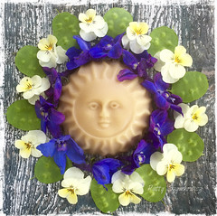 Salute to the Sun (~*~ MagpiesNest) Tags: sun green circle purple mandala delphinium moneyplant beeswax lunaria violas