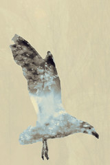 Bird art, double exposure (Dóra B.) Tags: life bird art animal outside outdoors fly wings soft doubleexposure small icelandic dorabirgis