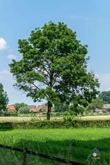 Bronkhorst (carolienvanhilten) Tags: mill bug nederland thenetherlands kip molen klaproos weiland haan lever achterhoek bronkhorst dickensmuseum