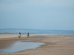 Exercising horses (nz_willowherb) Tags: beach forest scotland fife tentsmuir