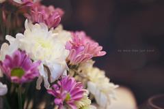 do more than just exist (Juavenita ) Tags: flowers blossoms refreshing horizontal purple white