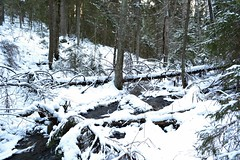 Brook from Kolmoislammit to Pitkjrvi in snowy forest (Espoo, 20120114) (RainoL) Tags: winter snow forest espoo finland geotagged january u brook fin 2012 uusimaa nyland esbo 201201 20120114 brooksofnuuksio geo:lat=6029197300 geo:lon=2453759900