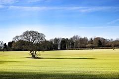 Photo of One Tree Field