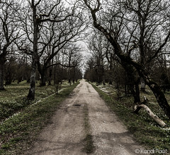 Endless road (K3ndu) Tags: road flowers trees sky white nature forest canon dead eos dc saturated estonia shadows path sigma 1770 pathway endless underexposure saaremaa 1100d tammik loode loodetammik