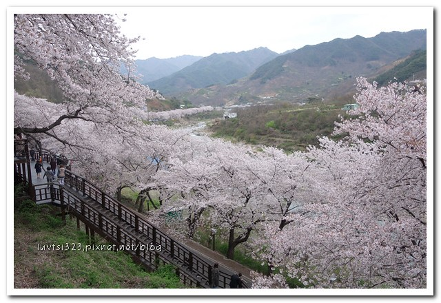 화개십리벚꽃길32