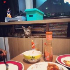 ที่ประจำนาง ไว้นั่งมองเราหม่ำข้าว #โต๊ะกินข้าวมีไว้ตั้งโชว์ กินจริงๆก็โต๊ะญี่ปุ่นขาประจำ