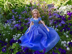 Disney Cinderella Limited Edition Doll (Szielo) Tags: flowers cute nature beauty garden botanical james store funny doll dolls lily disneyland disney cinderella limited edition lilyjames
