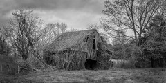 Barn_Wide (Bob G. Bell) Tags: abandoned barn rural vines brewers kentucky ky harvey fujifilm kudzu x30 benton blueribbonwinner bobbell
