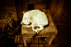 What Do Cats Dream Of? (Dave G Kelly) Tags: street travel sleeping pet animal cat chair holidays market sleep dream streetphotography morocco marrakech