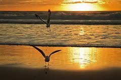 Sunrise with seagulls