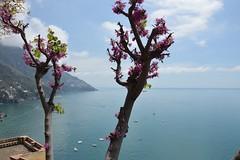 Positano's view (deniseirma) Tags: flowers sea flower mare view follow vista positano fiori pianta followme followforfollow