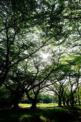 X-T1 2015-5-14_.jpg (peke20) Tags: sun tree green tokyo fujifilm xt1 xf1855mmf284rlmois