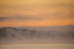 welcome to a new day (lvphotos!) Tags: new morning mist nature birds misty fog start river landscape rising early colorful day beginning