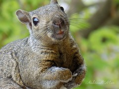Smile :) you r'e on Flickr (NaturewithMar) Tags: macro squirrel funny friday nikoncoolpix l330