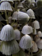Funghi (michelangelo ciminale) Tags: naturaleza nature mushrooms costarica natura funghi hongos monumentonacionalguayabo