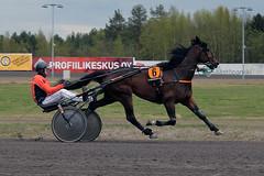 IMG_2467 (lovelymelancholy) Tags: horses horse hevoset hevonen horseraces ravit imrautio ravihevonen oulunravirata