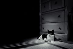CATS (Russ Evans Photo) Tags: cats nikon sb600 d600