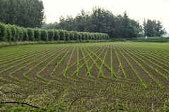 Crossed lines (Nederland in foto's) Tags: nature netherlands landscape nikon outdoor nederland farmland willow wilgen crossedlines landschapsfotografie natuurfotografie naturephotographer outdoorphotography paulvandevelde pdvandevelde nederlandinfotos padagudaloma