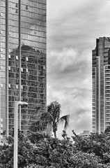 From the Blaisdell Center parking lot (Guy: Jussum Guy) Tags: trees blackandwhite reflection monochrome buildings hawaii oahu palm arena honolulu condos stanchion blaisdell pentaxk3