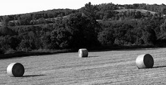 rotoballe in the evening (1) (Ange 29) Tags: trees bw king olympus hay bales township omd em1 zd 35100mm