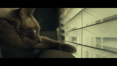 Falling Asleep While Watching Television (Vicky.Yang) Tags: cinematicphotography colorgrading colorgrade light shadow flyonthewall cat