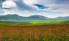 _DSC3066 (Martino_Antonello) Tags: panorama montagne fiori paesaggi norcia castelluccio infiorata