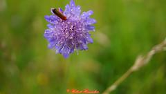 Pflanzen und Insekten (hubert_hamacher) Tags: pflanzen blumen orchidee blume pilze insekten pilz orchideen naturschutzgebiet schlangenberg