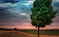 (POP) (limebluphotography) Tags: landscape trees sky summer color green blue purple officialblu beauty land nature earth field nikon canon explorethebruce
