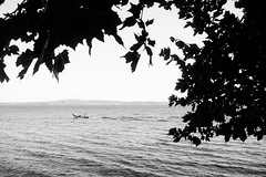 FIshing (lorenzoviolone) Tags: agfascala200 bw blackwhite blackandwhite boat finepix fujix100s fujifilm fujifilmx100s hill monochrome vsco vscofilm waves x100s dopplereffect hills horizononthewater lake leaf leaves mirrorless motorboat streetphoto streetphotobw streetphotography tree walk:trevignano=07172016 trevignanoromano lazio italy