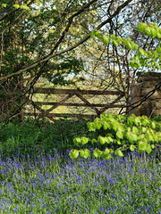 nature-gate