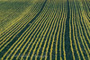 _A5B4211-5.jpg (w11buc) Tags: sunset field evening farm seed crop fields agricultural stcombs