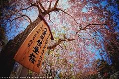 Narita, Japan (RyanBaxter00) Tags: travel trees japan temple cherryblossom narita