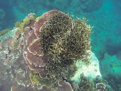 Pulau Tulai Coral Island (Sandra & Dean K.) Tags: tower pool coral canon mouse island eos monkey hotel chinatown turtle petronas twin resort monitor deer jungle malaysia 7d kuala tioman pulau berjaya lumpur regalia tulai impiana