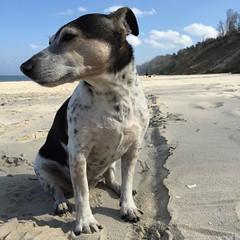 Usedom, Baltic Sea (fabianmohr) Tags: sea dog beach island balticsea baltic usedom mecklenburgvorpommern pitu