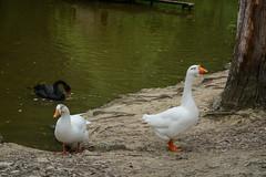 (paper_tail) Tags: birds sochi