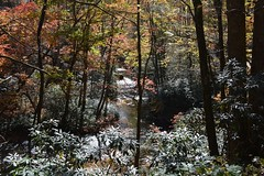 Pisgah Forest, NC (melike erkan) Tags: autumn trees light leaves forest nc flickr karma magical brevard artisticphotography autofocus westernnc flickrnature angelawards buildyourrainbow