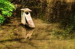 For Rent (Kuby!) Tags: park friends house bird lens zoo for nikon mo missouri april springfield aquatic rent dickerson topaz adjust dpz d300 kuby zoological 2015 18200mm fotz kubitschek habitate