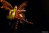 Fada (DeividGrassi) Tags: lighting light lens fairy iluminação fada fadinha