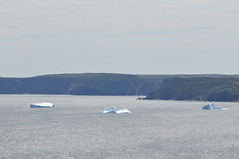 A final look at the icebergs as we turn away (oldandsolo) Tags: seascape canada nfl iceberg floatingice coastalroad coastaltown localhistory baydeverde oceanroad icemountain coastaldrive coastalscenery easterncanada newfoundlandandlabrador icechunks baccalieutrail explorertrail breakingiceberg