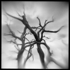 Kodachrome Basin #3 (LowerDarnley) Tags: southwest tree utah bare branches limbs reversedlens kodachromebasin flippedlens cannonville agfaisoly holgalens modifiedcamera transplantedlens