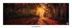 Autumn Rays (John_Armytage) Tags: autumn trees panorama sunlight landscape pano sony australia bluemountains panoramic nsw sunrays mountwilson sigma35mm johnarmytage sonya7r2 nisifiltersaustralia