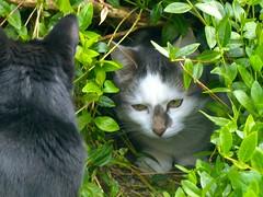 The Cave II (frankbehrens) Tags: cats tom cat chats chat gatos gato katze katzen kater