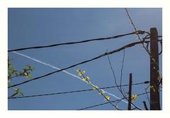 Rcration (hlne chantemerle) Tags: panorama fleurs jaune divers branches traces bluesky bleu abstraction vue paysages lignes ciels fils intersections photographies mobilierurbain photosderue