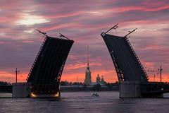 Saint Petersburg: Palace Bridge (alexxdarkside) Tags: bridge white saint sunrise river russia petersburg palace nights neva