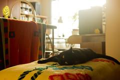 Segismunda (Barcoborracho) Tags: sol cat contraluz ventana gatos amarillo bella gatitos gatita ojosamarillos gatanegra luzsol cosinamccosinonw35mmf28