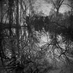 Less Discernible Houses #3 (LowerDarnley) Tags: trees house ma holga woods branches swamp stoneham